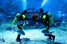 India's Ultimate Scuba Diving Destinations >>  The Indian peninsula boasts of a coastline that is over 8000Km long. Coupled with the numerous islands of Lakshadweep and Andaman and Nicobar, it makes for many perfect scuba-diving destinations.#365hops, #scubadivinginindia, #scubadivingingoa