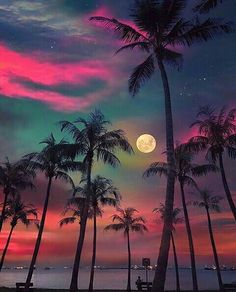 Post with 1975 votes and 103375 views. Tagged with nature, awesome, moon, singapore, palm trees; Beautiful Nature Wallpaper, Beautiful Moon, Beautiful World, Beautiful Landscapes, Beautiful Hotels, Amazing Wallpaper, Beautiful Scenery, Beautiful Beaches, Beach Wallpaper