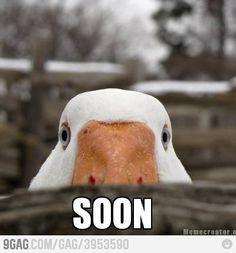 1000+ ideas about Soon Meme on Pinterest | Meme Pics, Funny ...