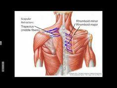 Scapula Protraction, Retraction, Rotation - YouTube