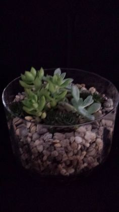 Living succulents garden in a large glass bowl.  by UrbanSucculent, $90.00