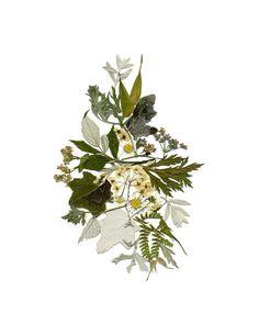 Botanical print Pressed flowers print Herbarium Dried flowers Wall art Flower prints Pressed botanicals Plant art Pressed flowers framed art by FloralCollage on Etsy #botanical #pressedflowerart #driedflowers #plants