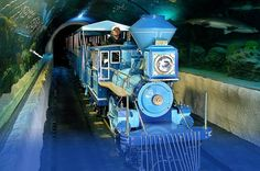 HOUSTON: Hop aboard the C.P. Huntington train and take a ride through the center of a 200,000-gallon shark tank for an up-close view of a variety of shark species.