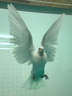 damien hursts dove #1 Damien Hirst, Organic Form, French Decor, Painting Abstract, Taxidermy, Sculpture Art, Breathe, Artworks, Illustration Art