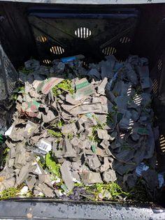 Homemade Compost#browns#eggcartons#woodchips