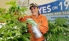 Pandy Arrieta, an intern at Oaksterdam University, the nation's first marijuana trade school, takes care of marijuana plants in a classroom.