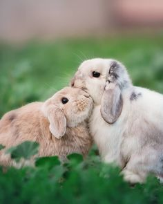 Happy Bunny Club is the monthly subscription box for rabbits, packed full of toys, treats and guaranteed fun! Suitable for guinea pigs and small animals too! Cute Baby Animals, Animals And Pets, Funny Animals, Baby Bunnies, Cute Bunny, Animal Testing Cruelty, Cute Dogs, Cute Babies, Cutest Bunny Ever