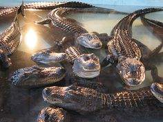 The Arkansas Alligator Farm (Hot Springs, AR) | The 11 Best Places To Go On A RedneckVacation