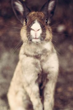 I see Trent Reznor in this bunnies face (around the nose!) lol...silly bunny face