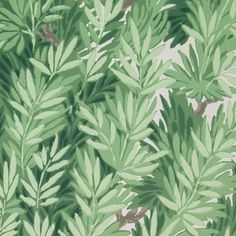 An archive print depicting dense foliage of yew trees in shades of green, with a off white background. Archive Anthology by Cole and Son.