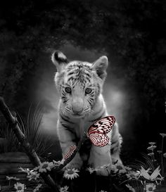 tiger baby by Ponthieu on deviantART