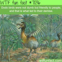 Dodo bird - WTF fun facts