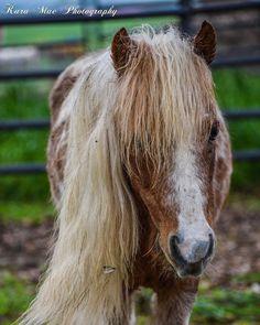 The most handsome little gentleman around. Little Gentleman, Handsome, Horses, Animals, Animales, Animaux, Animal, Animais, Horse