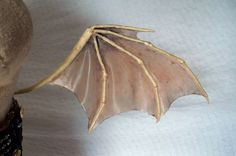 Dragon/bat wings. This is interesting because they made the membrane out of mod podge. Basically if you do it on paper and then wash away the paper you're apparently left with a good stretchy membrane!