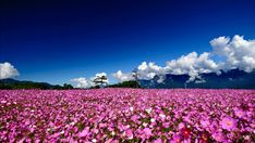 Field flowers wallpaper landscapes background