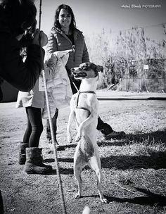 Petjades 2015 - Societat Protectora d`Animals de Mataró - antua blonde photography -  fotógrafo solidario - barcelona - animal - fotos - reportajes - animal de compañía - maresme