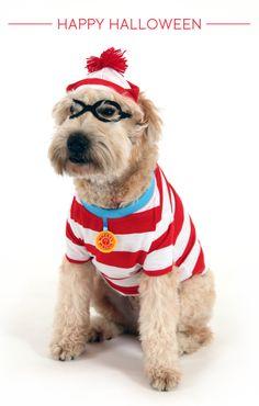sc 1 st  Pinterest & Banana Split | Pet Fashion | Pinterest | Dog halloween Dog and Doggies