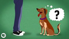In a recent episode of It's Okay To Be Smart, host Joe Hanson explains how dogs interpret and respond to verbal and visual cues from human language, I Love Dogs, Puppy Love, Funny Pix, Funny Dogs, Animal Rescue Site, Best Dog Training, Service Dogs, Mans Best Friend, Dog Owners