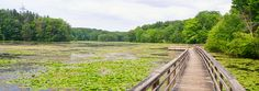 Teatown Lake Reservation | Hike the Hudson Valley