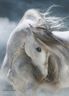 Trueno ~ Andalusian Stallion