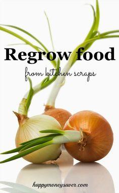 Regrow Food from Scraps