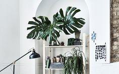Mur blanc avec étagère et plantes artificielles.