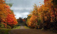 Осень — фото, картинки, пейзажи
