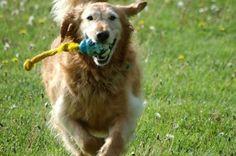 Good Dog Behavior:  Exercise, Stress and Pooch Problems  http://www.petiquettedog.com/dog-behavior/good-dog-behavior-exercise-stress-pooch-problems/