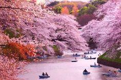 Chidorigafuchi, Japan.