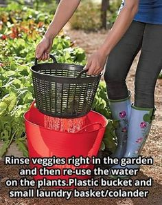 Garden Yard Ideas, Lawn And Garden, Garden Projects, Veg Garden, Vegetable Gardening, Cheap Garden Plants, Veggie Gardens, Garden Trellis, Farm Gardens