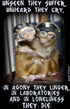 TAKE ACTION , SIGN & SHARE! http://www.thepetitionsite.com/8/against-animal-testing-of-any-kind/ U.S. Food and Drug Administration currently requires pharmaceutical products to first test their products on animals in cruel and painful experiments. Thousands of mice, rats, rabbits, dogs & monkeys are forced to swallow or inhale massive doses substances—which cause severe abdominal pain, paralysis, convulsions, seizures, and bleeding from the nose, mouth and genitals