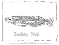 Rainbow Fish Coloring PageAustralian To Madagascar