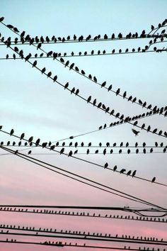 Repetition of birds, Asymmetry of lines, Contrast of dark birds against light sky, Rule of Thirds with sky being broken up where horizontal lines run. amarisea: touchdisky: Birds On The Wire by Faith Alexandra Belle Photo, Beautiful Birds, Pet Birds, Silhouettes, Art Photography, Photos, In This Moment, Landscape, Amazing