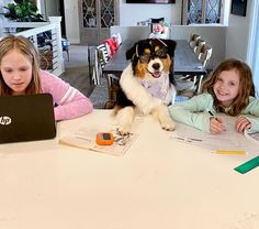"Canyon Creek Aussies on Instagram: ""Well day 6 of home schooling and I decided to leave Dezzi in charge! She would be better at teaching them anyway.. 🤓 For reals though god…"" Black Tri Australian Shepherd, Canyon Creek, Better Day, Aussies, Home Schooling, I Decided, Wellness, Good Things, Teaching"