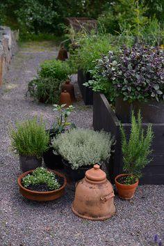 En köksträdgård skapas   Zetas Trädgård