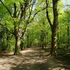 ウィンブルドン・コモン:木のトンネルと木漏れ日