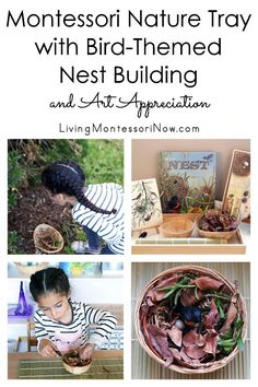 This Montessori nature tray for spring has a simple STEM bird-themed nest building activity and a John James Audubon bird print for art appreciation; perfect for preschoolers at home or in the classroom - Living Montessori Now Montessori Preschool, Montessori Education, Preschool Activities, Montessori Elementary, Animal Activities, Steam Activities, Spring Activities, Kindergarten Stem, Nest Building
