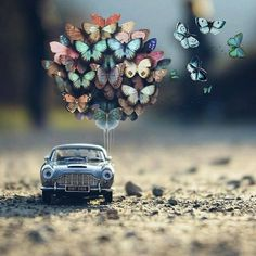 Cool Pictures For Wallpaper, Love Wallpaper, Nature Wallpaper, Wallpaper Backgrounds, Miniature Photography, Cute Photography, Cute Cartoon Wallpapers, Pretty Wallpapers, Artsy Bilder