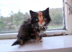 """kittehkats: """" offuhuge.com """""""