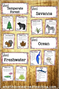 Sort Animals and Plants into Biomes Science Education, Science Activities, Life Science, Leadership Activities, Group Activities, Science Lessons, Physical Education, Cooperative Learning Strategies, Learning Resources