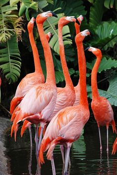 The flamingos necks are so beautiful here, could use the shape of them to make different patterns