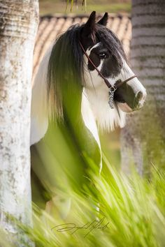 Wow! This horse is beautiful. Awesome horse photography.