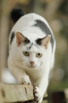 猫画像|爪研ぎてんちゃん♪