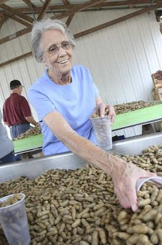 As she has done for 31 years, Betty Stover fills cups with boiled peanuts for the Pelion Ruritan Club to sell and raise money for local scholarships at the 31st annual South Carolina Peanut Party. The event continues Saturday 8 a.m. to 11 p.m. and features a parade, dog show (dog and owner look-a-like and best dressed dog contest), a peanut butter and jelly sandwich eating contest, car show, peanutty recipe contest and local entertainment at the Pelion Community Club, 951 Pine Street.