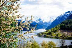 Ulvik village, Norway by Tom Ye on 500px