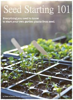 Seed starting 101 - Everything you need to know to start your own garden plants from seed. (Free Downloadable PDF eBook)
