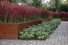 option: I Imperata cylindrica 'Red Baron' Red Baron Japanese Blood Grass. Warm season, for about 5 months. Modern Garden Design, Contemporary Garden, Landscape Design, Landscape Architecture, Back Gardens, Small Gardens, Outdoor Gardens, Modern Landscaping, Backyard Landscaping