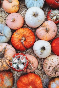 Who says all pumpkins have to be orange? Love these gorgeous fall colors.