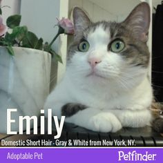 #PetAdoption sometimes comes with a few surprises. Aren't you curious why Emily hasn't been adopted yet?
