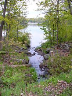 Six Mile Lake Provincial Park, Ontario Canada  Photo credit: Michelle Simone